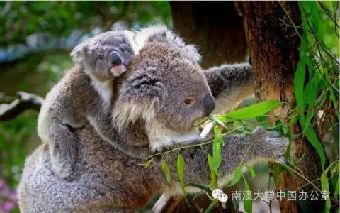 【知识】鲜为人知的澳洲大数据,带你深入了解这片神奇的大陆!